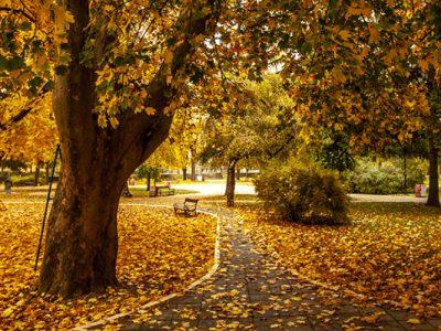 knjazevac-jesen